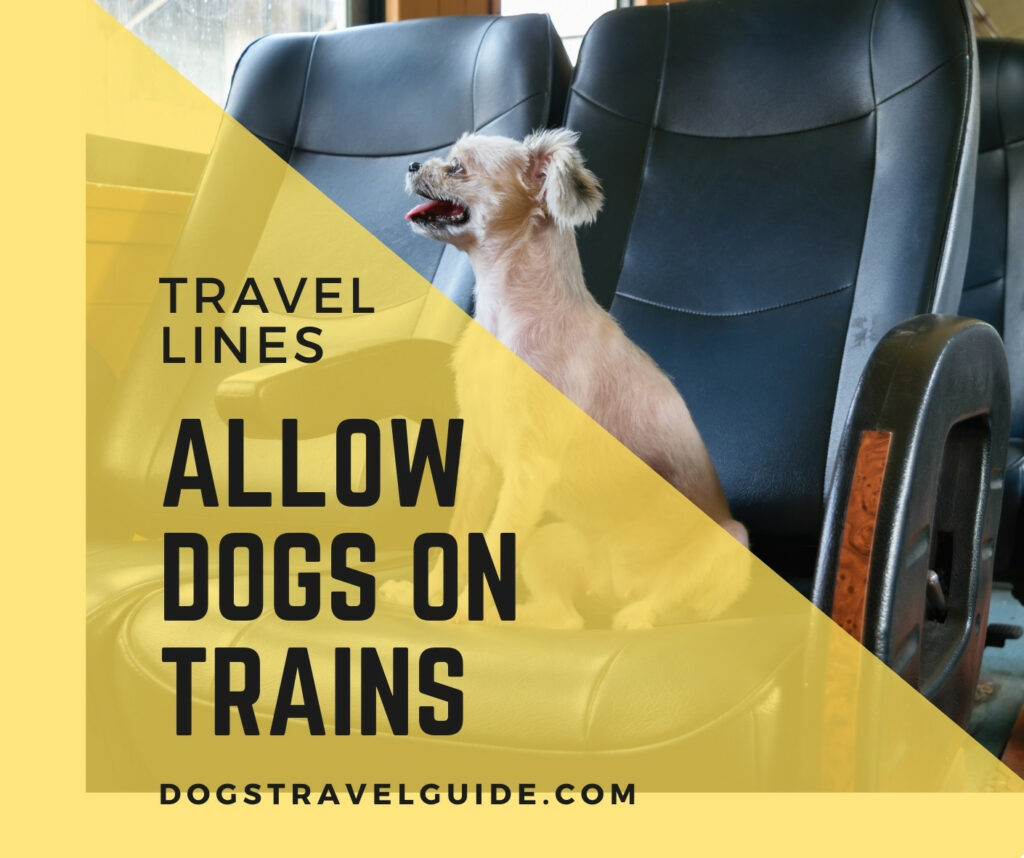 dogs on trains