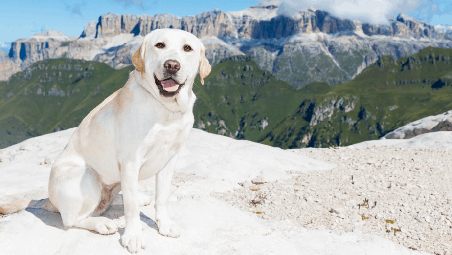 How To Travel With Your Dog To New Zealand?