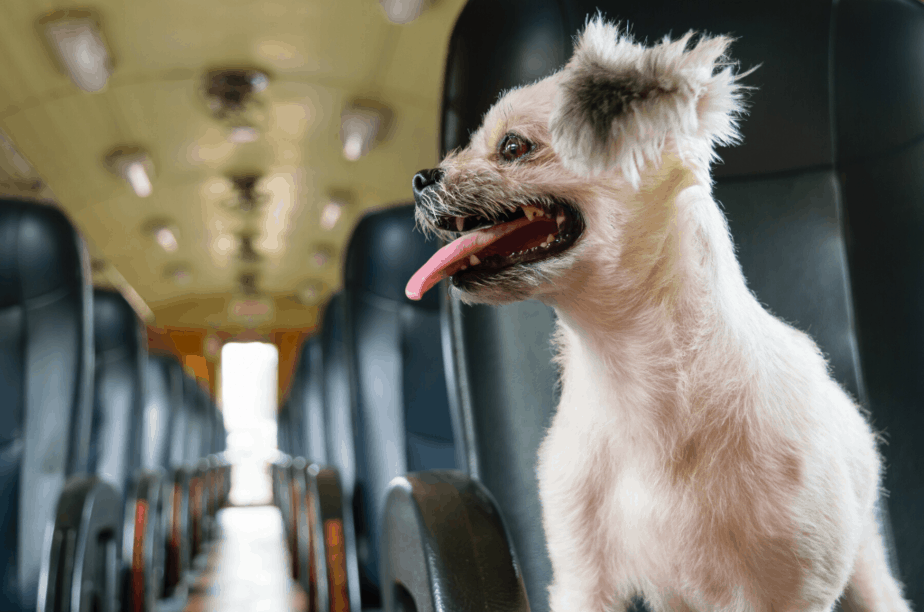 Picture of dogs on trains