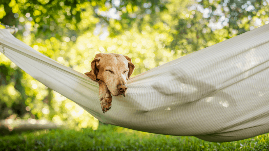 can dogs sleep in a hammock