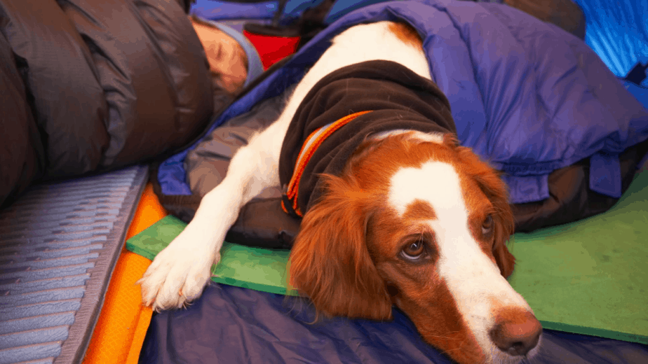 dog keeping Warm In Tent
