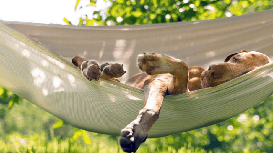 dog-sleep-in-a-hammock