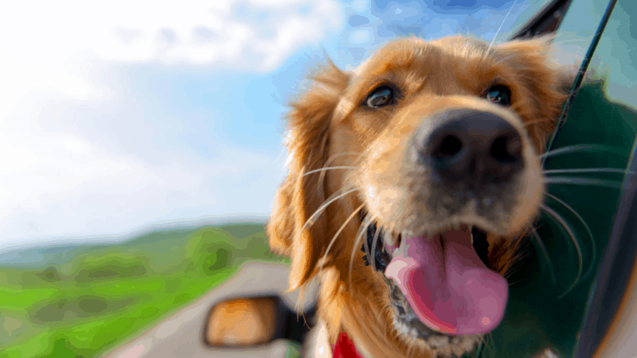dog-traveling-in-a-car