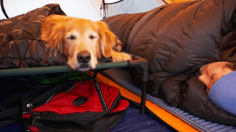 keeping Dog Warm In Tent
