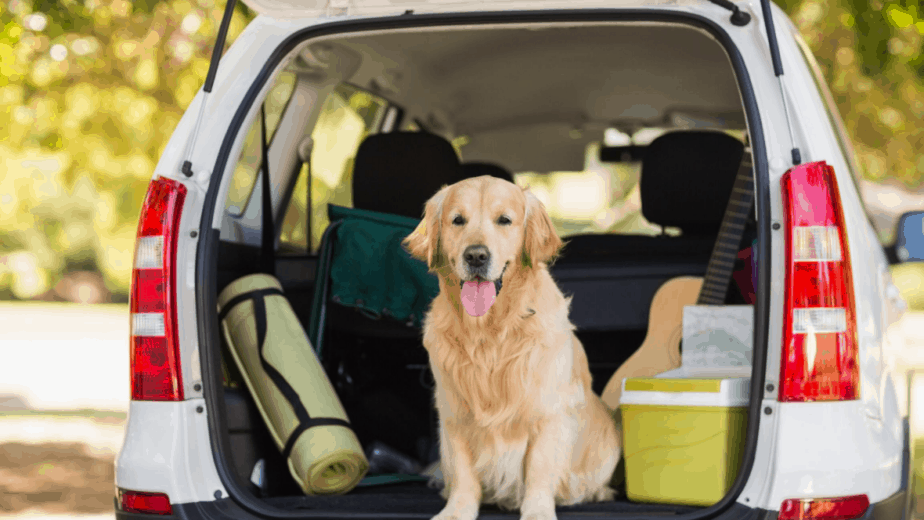 dog secure in car boot