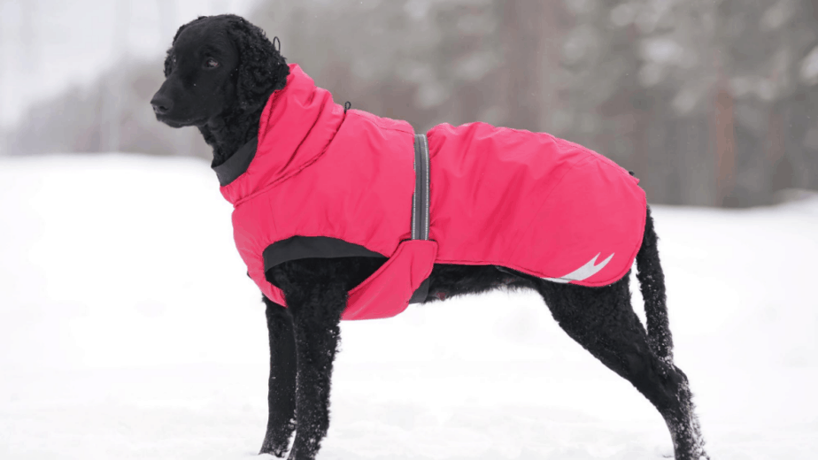 Dog wearing Waterproof Coats With Underbelly Protection