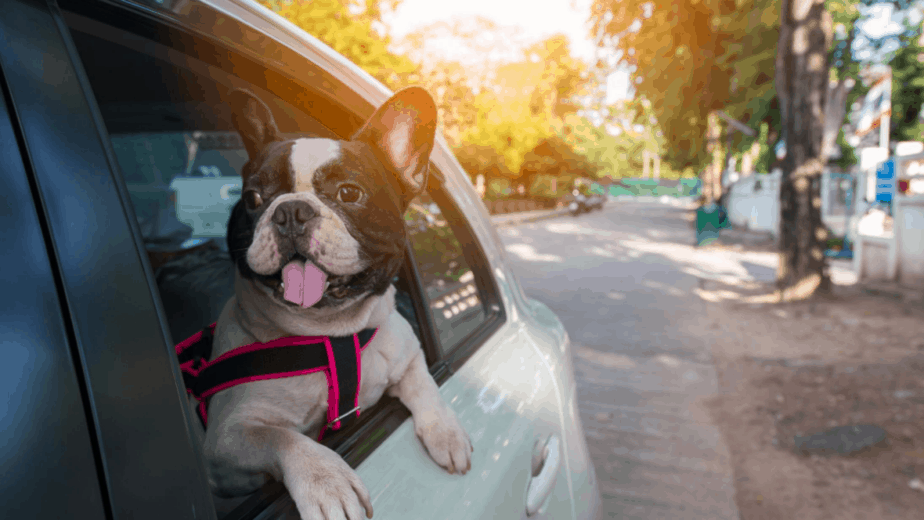 Safest Way For Dog To Ride In Car
