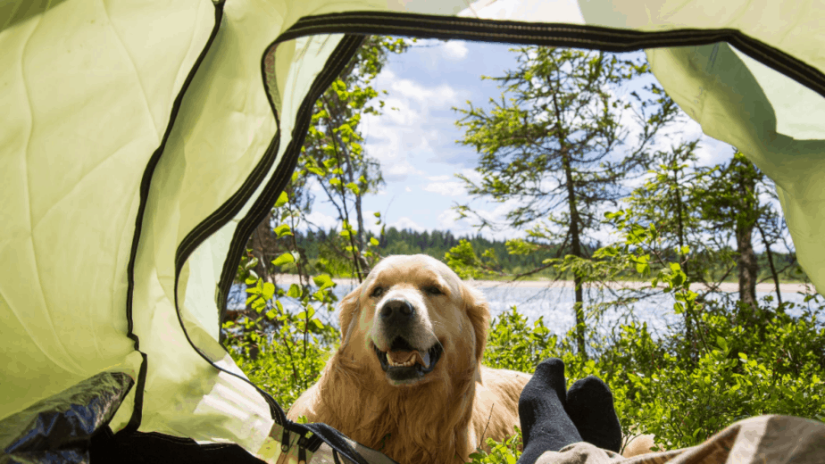 Leaving A Dog In A Tent While Camping