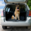 Dog Safety When Travelling In The Car Boot