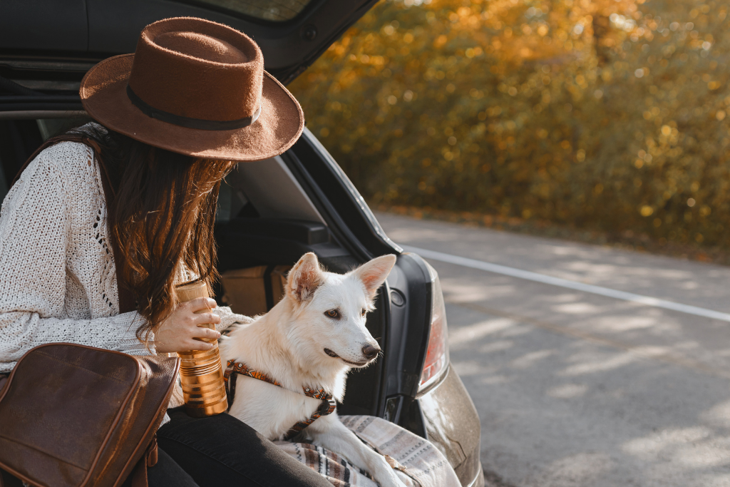 Picture of a dog travelling in the car boot