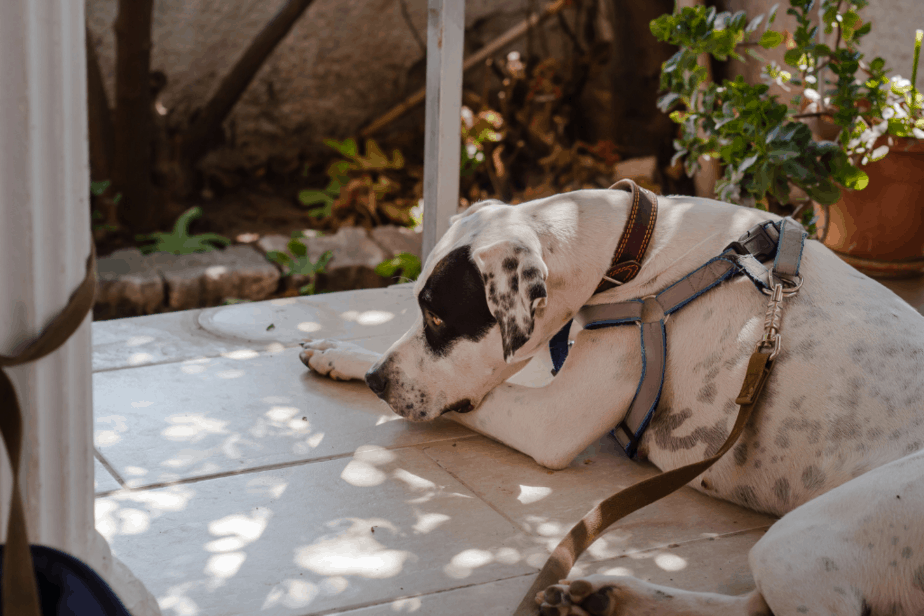 dog wearing a collar and harness