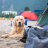 Camping With A Dog In A Tent: Tips To Do It Right!