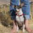Hiking With A Chihuahua: Step By Step Guide
