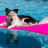 10 Cool Puncture Proof Dog Pools: 2021