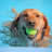 Dog Ear Plugs For Swimming