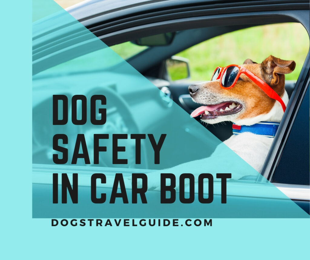 Dog Travelling In Car Boot (Rules & Safety)