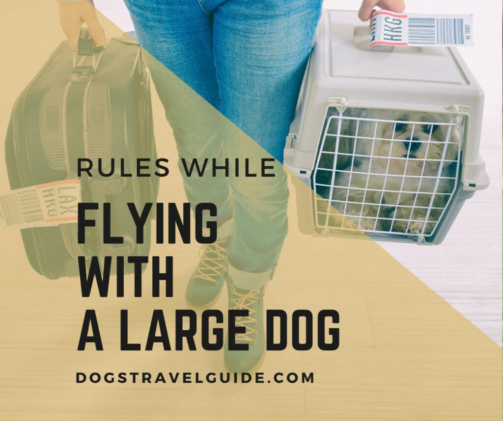 Rules while flying with a large dog