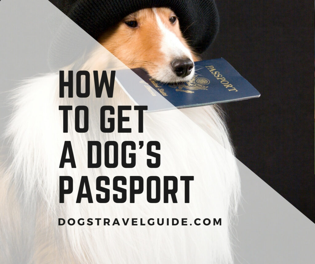 how to get dogs passport