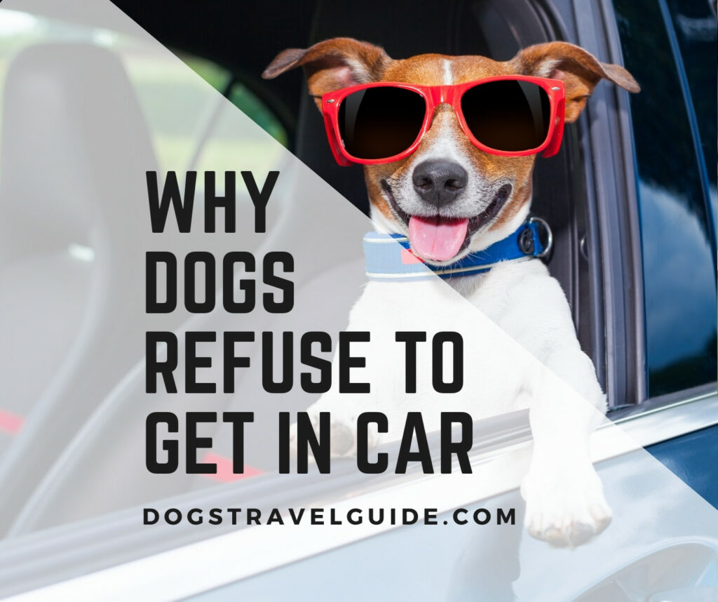 why dogs refuse to get in car