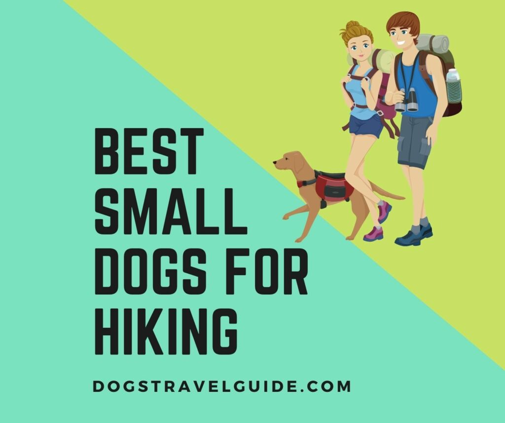 Best Small Dogs for Hiking and Backpacking